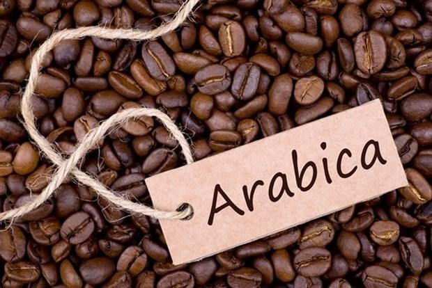 越南阿拉比卡咖啡豆出口价格暴涨 hinh anh 1