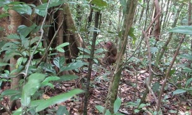 平福省布亚摩国家公园将6只稀有动物放归大自然 hinh anh 1