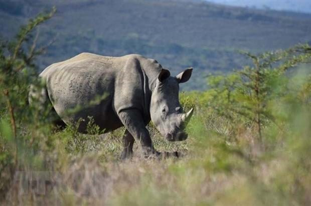 9·22世界犀牛日:增强民众对保护犀牛的意识 hinh anh 1