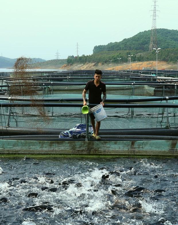 越南良好农业规范标准罗非鱼养殖技术 hinh anh 2