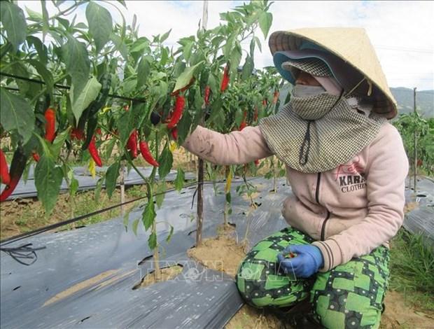 Ninh Thuan tang cuong hop tac quoc te ho tro phat trien kinh te - xa hoi vung dong bao dan toc thieu so hinh anh 2