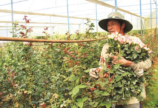 Lang hoa truyen thong Van Thanh hinh anh 1