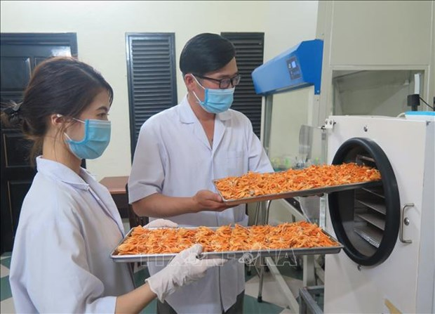 Kon Tum: Nang cao gia tri kinh te tu nuoi cay dong trung ha thao hinh anh 3