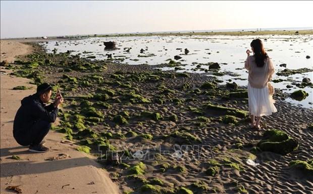 Canh dong rong bien - diem du lich kham pha o Ninh Thuan hinh anh 1