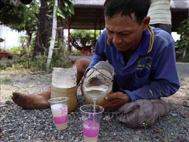 Thot not - loai cay dac trung cua vung Bay nui An Giang hinh anh 7