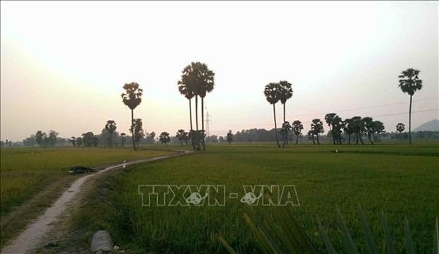 Thot not - loai cay dac trung cua vung Bay nui An Giang hinh anh 9