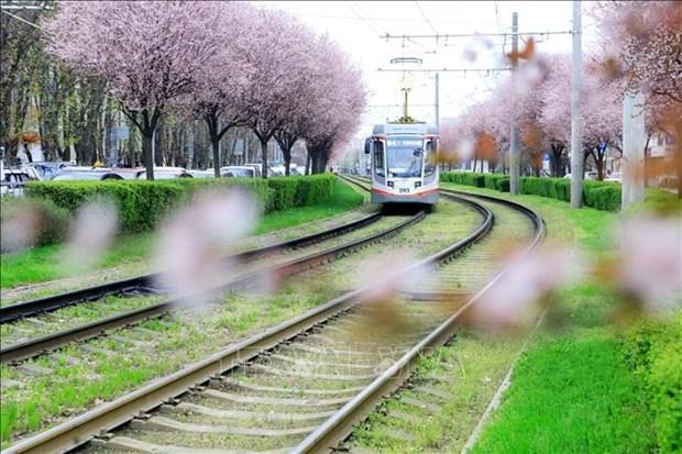 Nga: Du khach do ve mien Nam ngam hoa trong dieu kien han che vi COVID-19 hinh anh 1