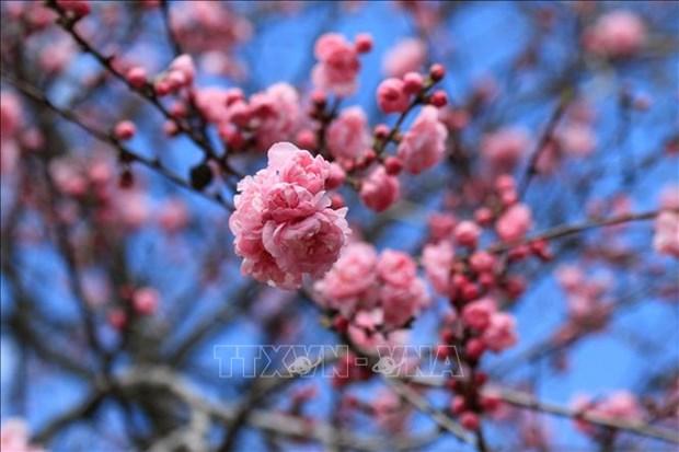 Nga: Du khach do ve mien Nam ngam hoa trong dieu kien han che vi COVID-19 hinh anh 13