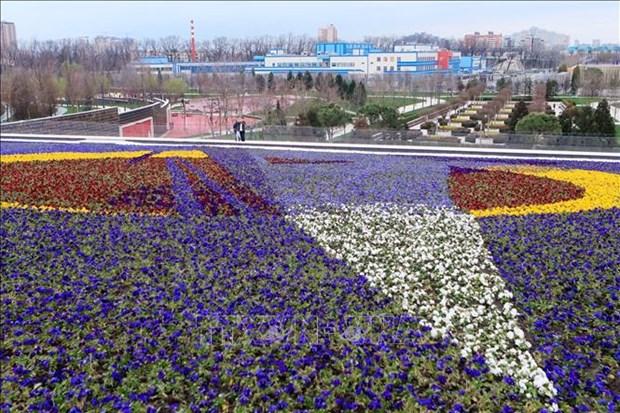 Nga: Du khach do ve mien Nam ngam hoa trong dieu kien han che vi COVID-19 hinh anh 5