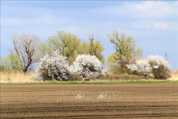 Nga: Du khach do ve mien Nam ngam hoa trong dieu kien han che vi COVID-19 hinh anh 6