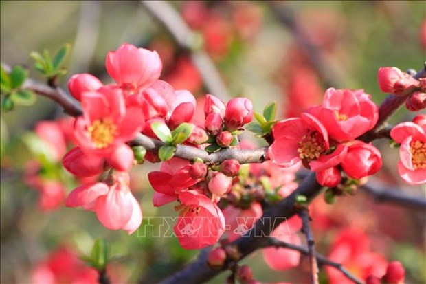 Nga: Du khach do ve mien Nam ngam hoa trong dieu kien han che vi COVID-19 hinh anh 7