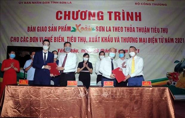 Ho tro che bien, tieu thu, xuat khau va thuong mai dien tu san pham xoai Son La hinh anh 2