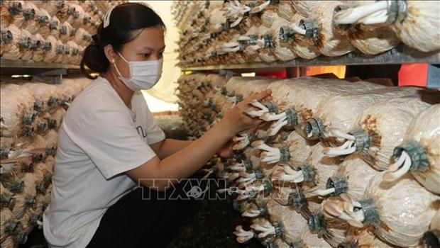 Trong nam mang lai thu nhap on dinh cho nong dan vung sau Phu Rieng hinh anh 1