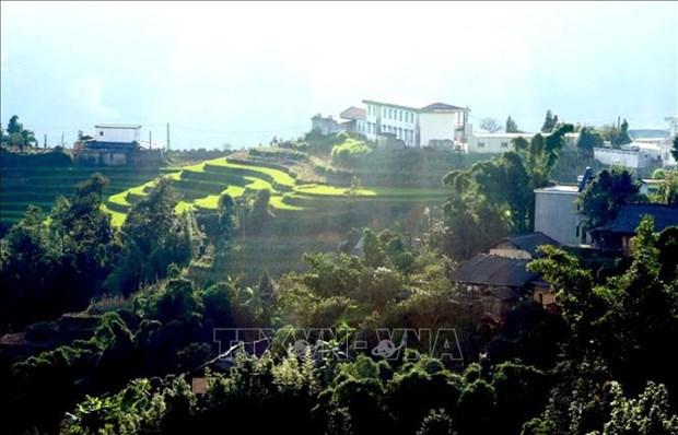 Lai Chau: Mua Vang tren vung bien gioi Si Lo Lau hinh anh 5