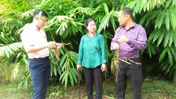 "Nu can bo nguoi Nung tien phong tren ""mat tran"" xoa doi ngheo cua Lao Cai hinh anh 2"