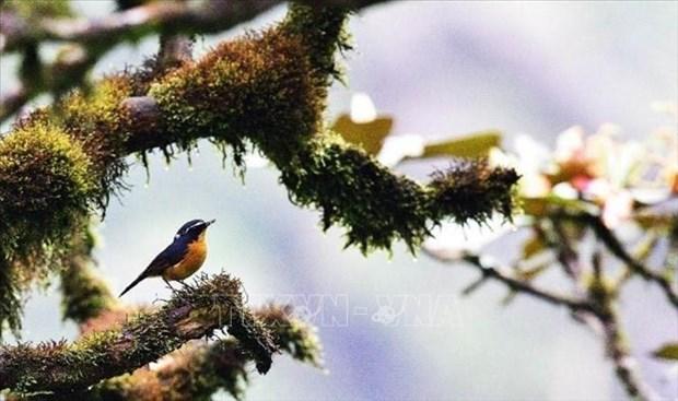 Nui Chua va Kon Ha Nung duoc UNESCO vinh danh Khu du tru sinh quyen the gioi hinh anh 10
