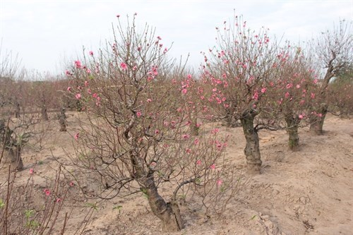 Quang ba loi the du lich cac vung trong hoa o Tay Ho hinh anh 1