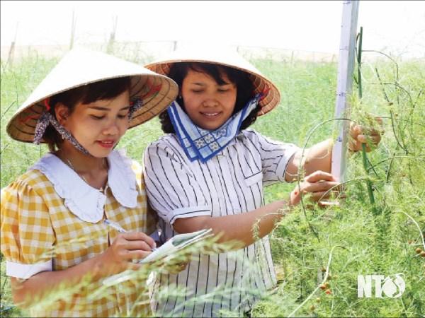 Ninh Thuan tao moi dieu kien de phu nu phat huy nang luc hinh anh 2