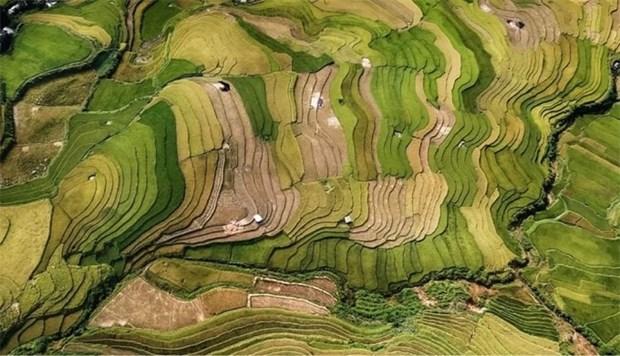越南摄影师在印度国际摄影大赛上荣获金奖 hinh anh 1