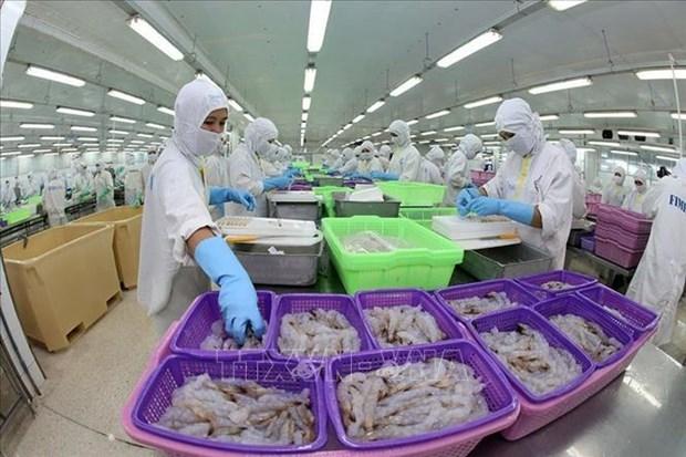 越南有望成为世界虾类主要生产国 hinh anh 1