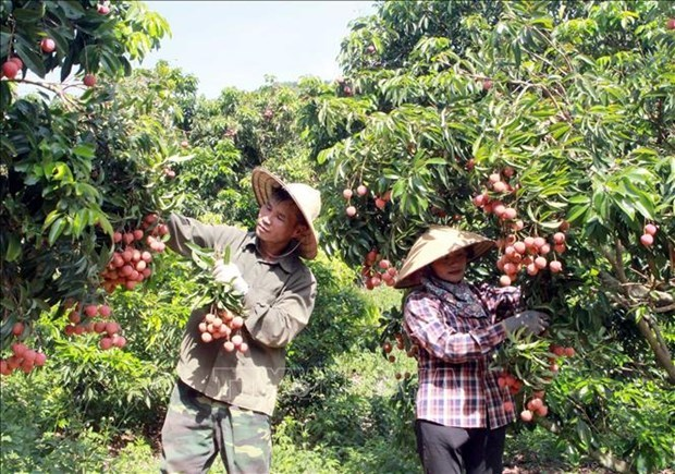 北江省加大科技应用力度 促进农村地区和山区发展 hinh anh 1