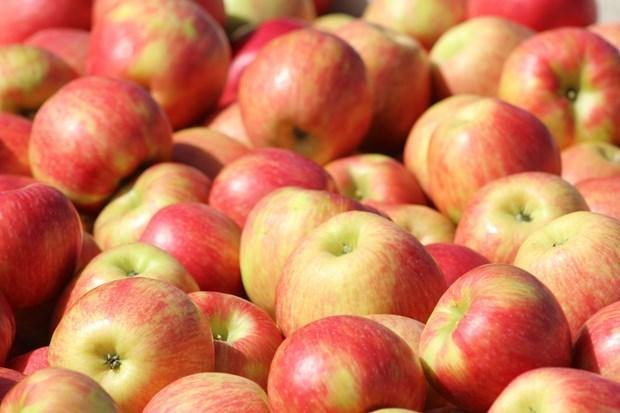 阿尔及利亚继续禁止进口13种水果 越南企业不受影响 hinh anh 1