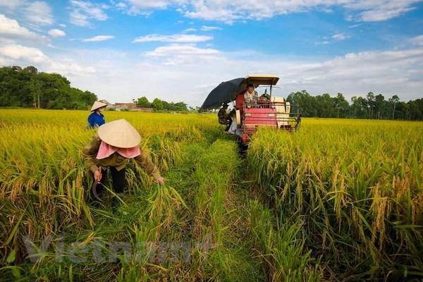 越南党一向主张大力推动农业、农业发展和不断提高农民的生活水平 hinh anh 2