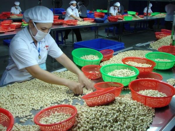 今年上半年越南腰果出口额达16.4亿美元 hinh anh 1