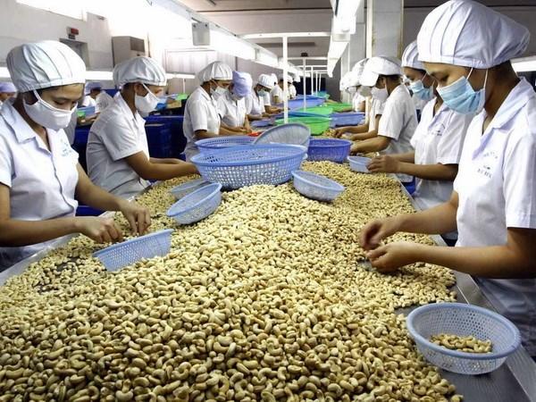 土耳其成为越南农产品的潜在出口市场 hinh anh 1