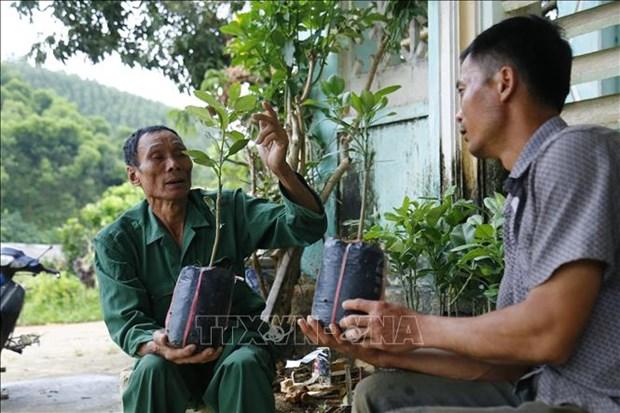 Lao nong Vu Van Lung di dau trong phat trien kinh te trang trai o Tuyen Quang hinh anh 1