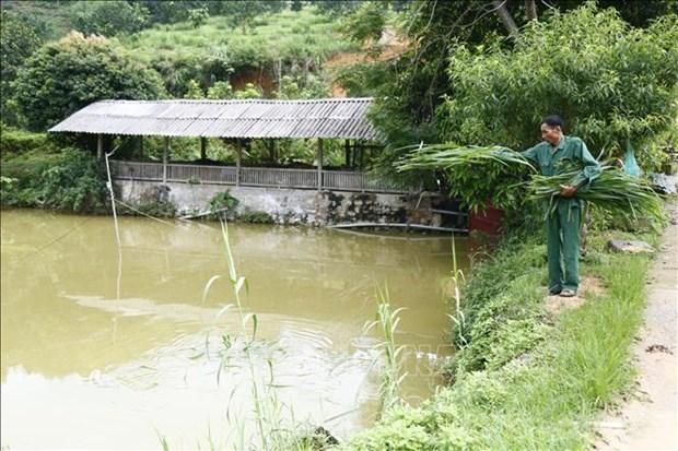 Lao nong Vu Van Lung di dau trong phat trien kinh te trang trai o Tuyen Quang hinh anh 3