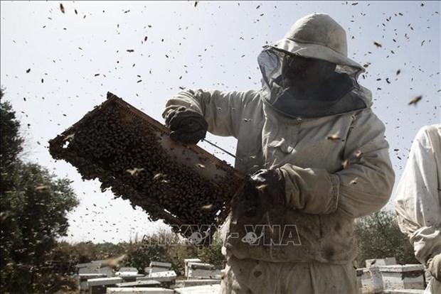 Bao ve va duy tri to ong nho cong nghe robot va AI hinh anh 1