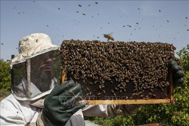 Bao ve va duy tri to ong nho cong nghe robot va AI hinh anh 2