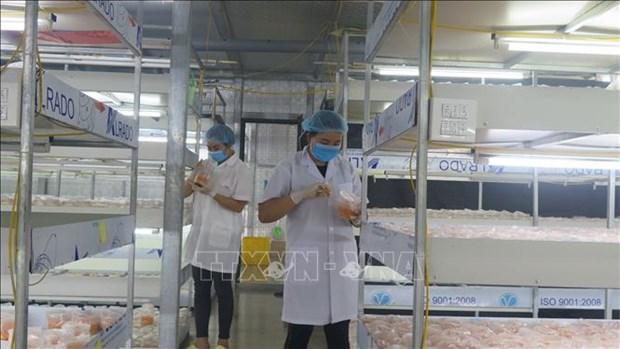 Thanh pho Lai Chau khuyen khich san xuat nong nghiep theo huong lien ket hinh anh 2