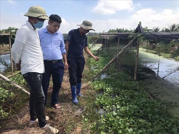 Anh Nguyen Van Huong nuoi oc thuong pham co hieu qua kinh te cao hinh anh 4