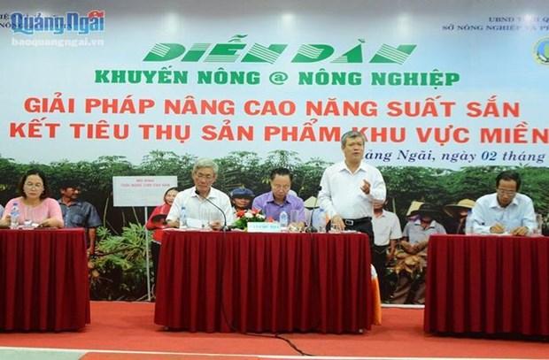 Tim giong san sach, khang virus kham la cho nguoi dan mien Trung hinh anh 1