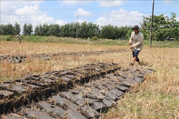 Tra Vinh chuyen hon 2.000 ha dat kem hieu qua sang trong cay co gia tri hinh anh 1