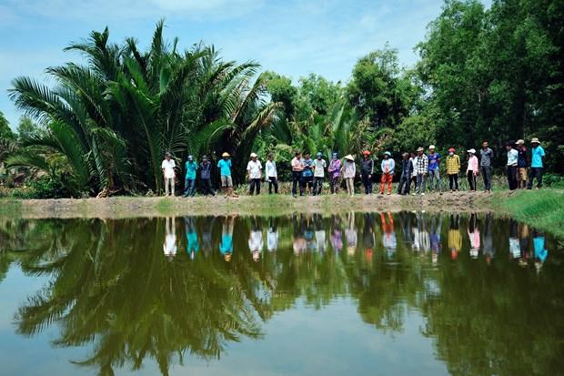 Hieu qua tu mo hinh san xuat lua - tom trong vung dong bao Khmer o vung sau Vinh Thuan (Kien Giang) hinh anh 3