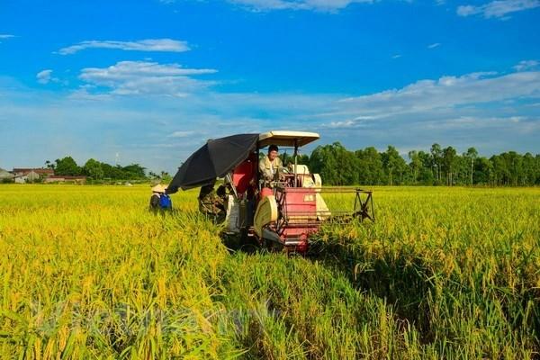 越南经济75周年发展历程:农业是支撑国民经济发展的基础产业 hinh anh 1