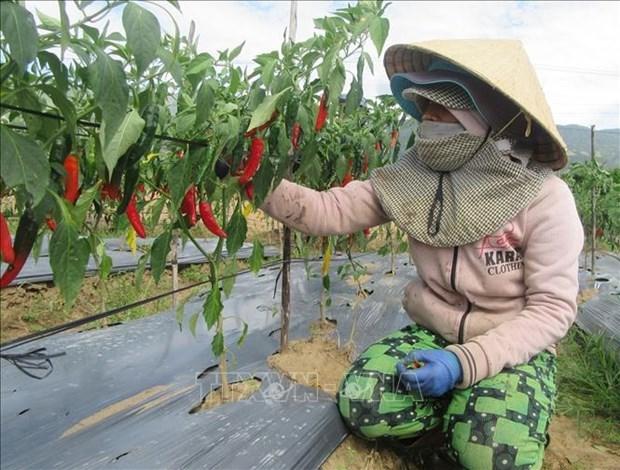 宁顺省加强国际合作 促进少数民族同胞经济社会发展 hinh anh 2