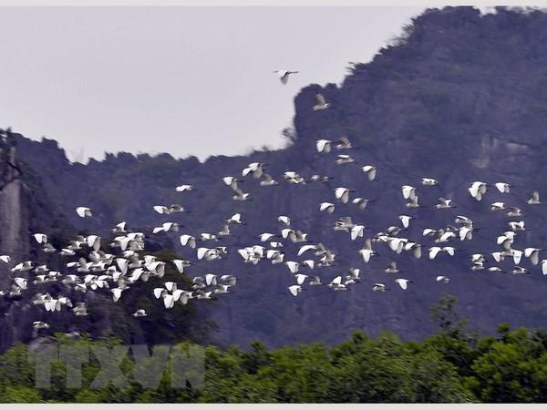 """海阳省的鹭鸶岛——越南北部""""独一无二""""的旅游景点 hinh anh 2"""