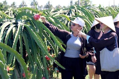 平顺省大力开发与可持续农业相结合的旅游产品 hinh anh 1