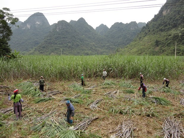 越南对来自泰国的食糖征收反倾销税助推国内制糖企业恢复发展 hinh anh 1