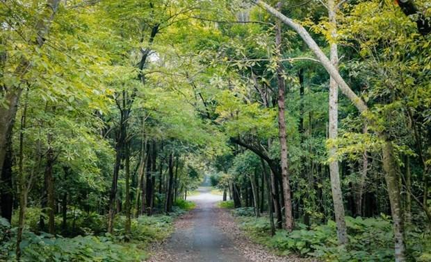 越南力争林业产值年均增速达5至5.5% hinh anh 1