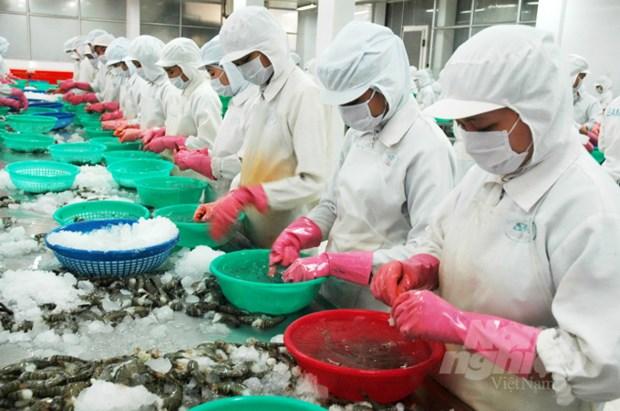 8月上半月越南水产品出口大幅下滑 hinh anh 1