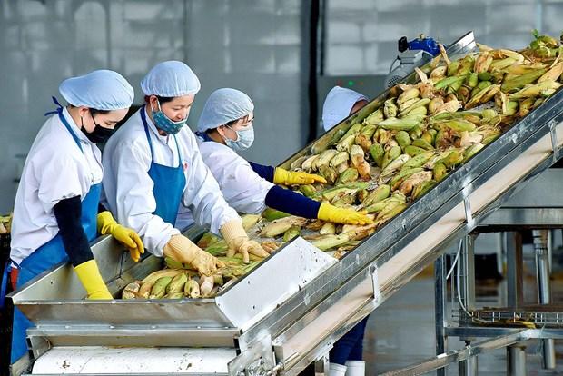 嘉莱省提出到2025年商品出口额达8.5亿美元的目标 hinh anh 1