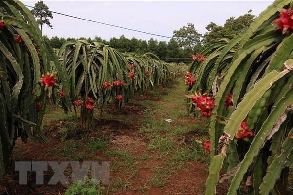 政府副总理黎文成主持召开促进农产品流通和销售的视频会议 hinh anh 1