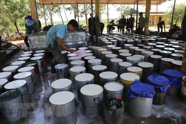 美国加大进口越南的橡胶力度 hinh anh 1