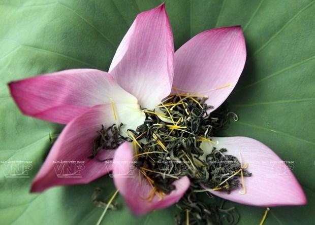 河内人热衷于莲花茶窨制业,竭尽全力保护与弘扬先祖传统 hinh anh 1